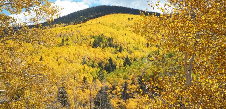 17252809-Aspens-turning-gold-in-fall-in-the-Sangre-de-Cristo-Mountains-in-the-Santa-Fe-National-Forest-Horizo-Stock-Photo